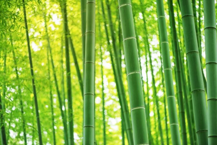 ibus-bamboo: Bộ gõ Tiếng Việt mới năm 2019